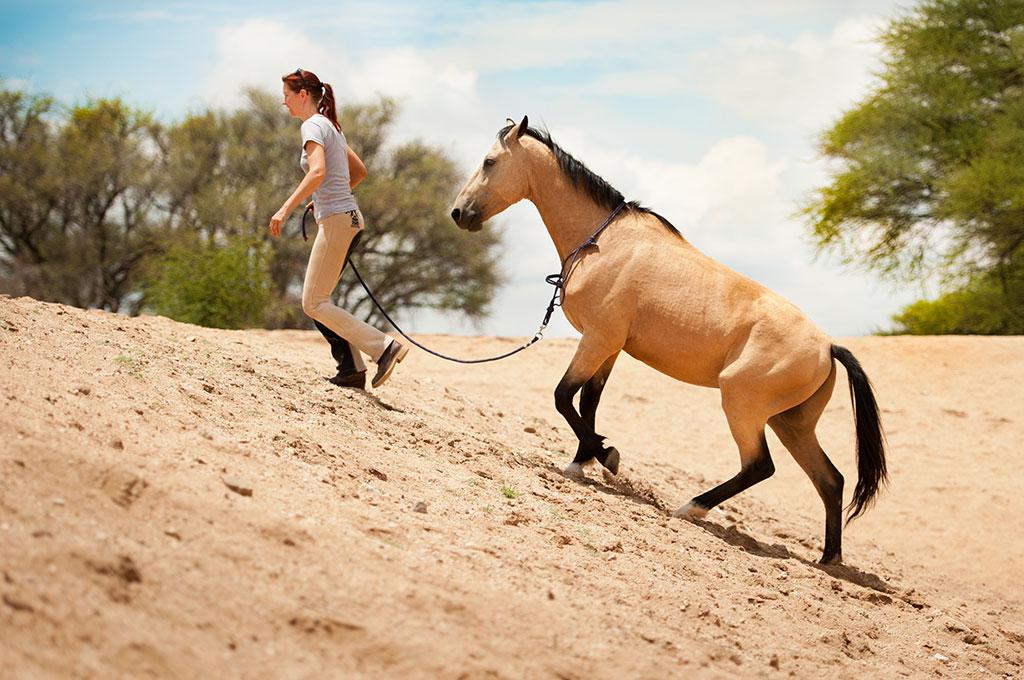 Namibia Wildpferde-Training