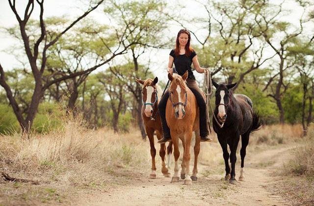 Namibia Wildpferde